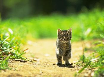子猫2.jpg